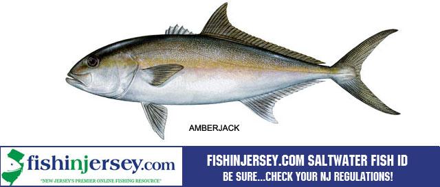 Fishing striped bass nj fishing bass fishing for Nj saltwater fish